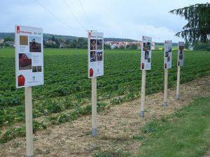 Erdbeerfelder: Informationstafeln